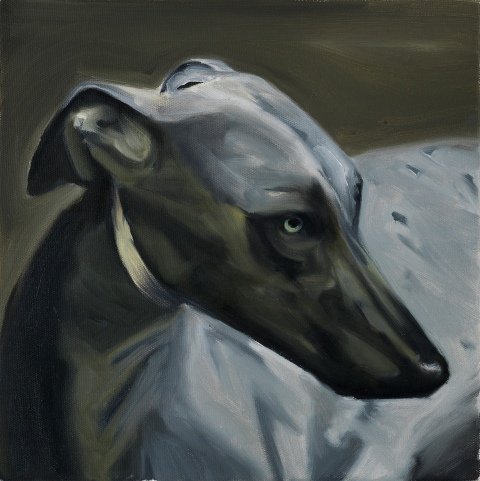 Greyhound. 30 x 30 cm. Oil on canvas. 2016